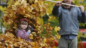 Child playing in a leaf pile with her dad