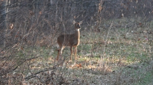 Read full article: Hunters Kill More Wisconsin Deer On Opening Weekend In 2018 Than 2017