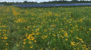 Read full article: Wisconsin's Solar Energy Will Increase By 33 Percent Under New Public-Private Partnership