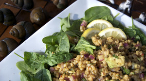 Read full article: Barley Salad With Dates