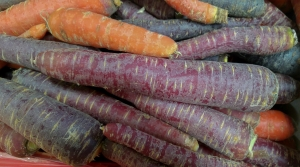 Carrots of different colors.