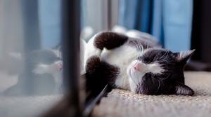 cat lying in window