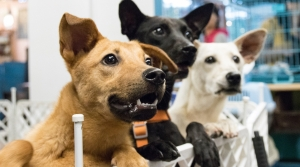 Three dogs waiting to be adopted