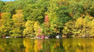 Early autumn trees along a lake