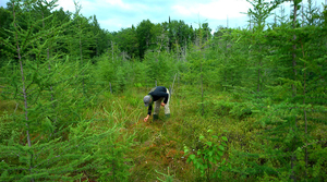 Read full article: 5 Things You Might Not Know About Sphagnum Moss, Wisconsin's 'Invisible Industry'