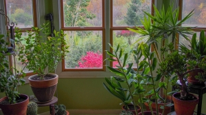 Read full article: 3 Things To Keep In Mind When Creating An Indoor Garden