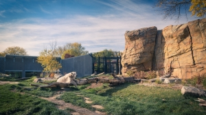 Read full article: Dane County, Zoo Society Part Ways Over Henry Vilas Zoo