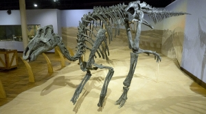 Read full article: Research Shows All Dinosaurs Could Regulate Their Own Body Temperatures