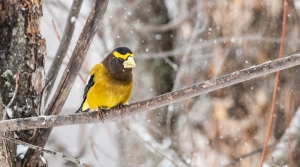 Read full article: 4 Birds To Watch Out For This Winter