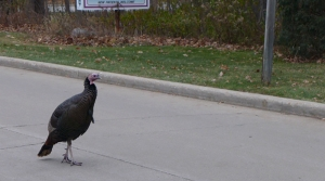 Read full article: Smoke The Turkey Dubbed The Unofficial Mayor Of Ashwaubenon