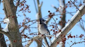 Read full article: Wisconsin Wildlife Officials Worried About Bird Illness