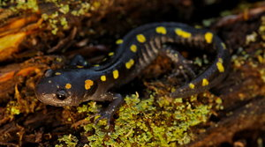 Read full article: New Guidebook Details Life Cycles Of Wisconsin's Amphibians
