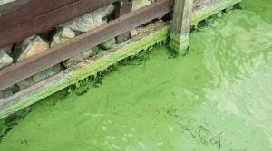 Read full article: Report: Wisconsin Among States Not Testing Adequately For Blue Green Algae