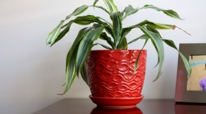 Read full article: How To Grow Houseplants In Low Light