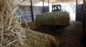 Read full article: Some Wisconsin Producers Worried About Tight Supply Of Hay For Livestock