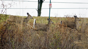 Read full article: Conservation Wardens Investigating Deer Poaching Across Wisconsin