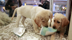 Read full article: Bill Would Go After Pet Stores That Sell Dogs, Cats