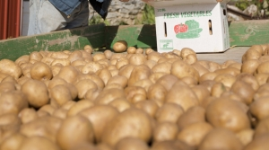 Read full article: Potato Farmers Grapple With Climate Change's Impact On Nitrogen Management
