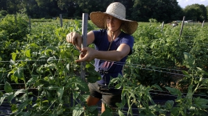 Read full article: Madison Food And Farms Film Festival Shines Light On Sustainable Food System