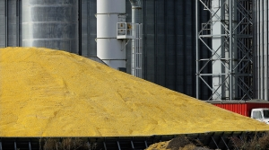 Read full article: Harvest Struggles Across Wisconsin Could Impact Supply Of Livestock Feed
