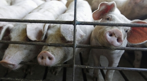 Read full article: Proposed $20M CAFO Stirs Up Debate In Northern Wisconsin
