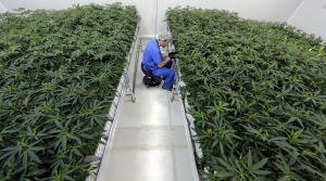 Read full article: GOP Lawmakers Introduce Bill To Legalize Medical Marijuana