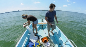 Read full article: Invasive Species Eluded Researchers In Lake Mendota For Years, New Study Says That's The Rule