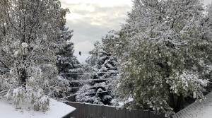 Read full article: Wisconsin Could See Wetter-Than-Average Winter