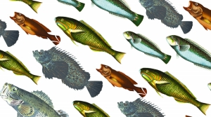 Read full article: We Call Them Fish. Evolution Says They're Something Else.