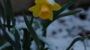 flower, snow