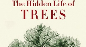 Read full article: The Hidden Life of Trees by Peter Wohlleben and Jane Billinghurst