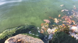 Read full article: Record-High Temperatures Lead To Late Blue-Green Algae Blooms In Some Lakes