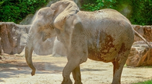 Read full article: Milwaukee County Zoo Adding 3rd Elephant