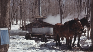 Read full article: WisContext: The Traditions And Transformation Of Maple Sugaring