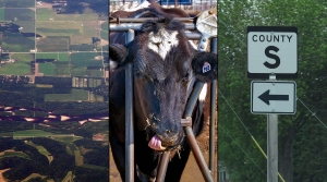 wisconsin aerial view, a dairy cow, a county road sign