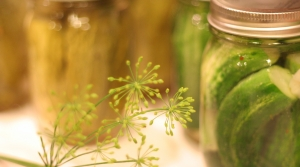 A spring of dill and some quart jars filled with freshly canned pickles
