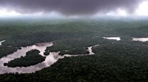rain forest gabon