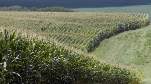 Read full article: Wisconsin Corn Farmers Facing More Market Uncertainty After USDA Planting Report