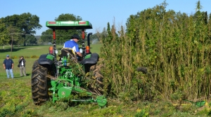 a tractor cuts a small plot of hemp