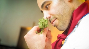 Male chef smelling herbs