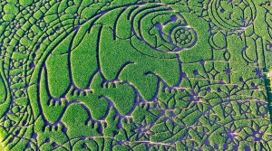 Tardigrade corn maze on Treinen Farm