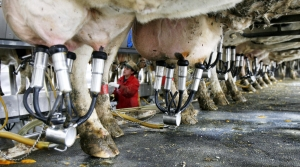 Read full article: GOP Legislators Propose UW Dairy Innovation Hub
