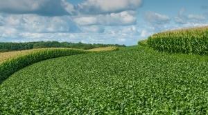 wisconsin cornfield