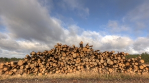 Read full article: Some Wisconsin Loggers Holding Off On Timber Harvests