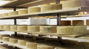 Read full article: Wisconsin's Specialty Cheesemakers May Be Better Off Than Other States