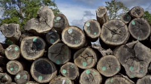 Read full article: Report Says Wisconsin Forestry Industry On The Upswing