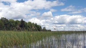 Read full article: Wisconsin Wild Rice Crops Look Healthy Despite High Waters