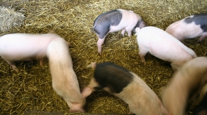 Read full article: Doctors Concerned By Levels Of Antibiotics Fed To Farm Animals