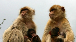 Read full article: Animal Rights Group Sues UW Over Monkey Experiments