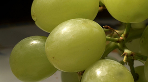 Read full article: UW-River Falls Researcher Creating Winter-Proof Grapes